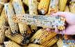 日常饮食中的最强致癌物竟是它?