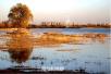 12月份的郑州北龙湖湿地公园 美丽指数飙升