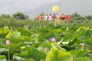 沈阳新民市将建蔬菜荷花等6个以上特色镇