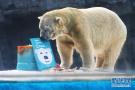 北极熊27岁生日会