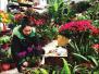 大庆新年花卉市场有点冷清 小盆花比大盆花更受欢迎