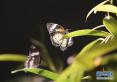 美国自然历史博物馆拍摄蝴蝶