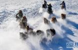 锡林郭勒草原冬季游 飞马踏雪原