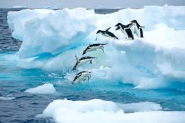 2018最具潜力旅游目的地:南极不再遥不可及