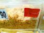 85度C被曝肉粉松面包当肉松面包卖 二者1斤价差120元