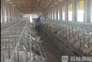养殖户卖头猪要倒贴300元 江苏生猪价格创四年新低