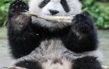 """很高兴再次见到你!""""熊猫王国""""的震后重生"""