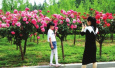初夏时节的郑州绿博园:月季正值最佳赏花期