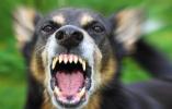 恶犬伤人事件再现,如何才能防身?这些事千万不要做!