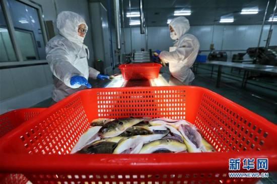北京赛车赚钱技巧:最新发现与创新!吃河豚中毒将有药可救了