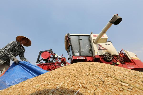 全国大规模小麦跨区机收基本结束 机收率达95.5%