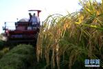 农业农村部:质量兴农万里行覆盖全国31个省区市