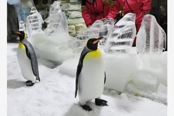 极地冰雕 清凉夏日