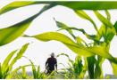 山东:加强灾后病虫害监测防控 确保秋作物生产安全