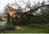 """飓风""""迈克尔""""即将登陆 美国佛罗里达州严阵以待"""