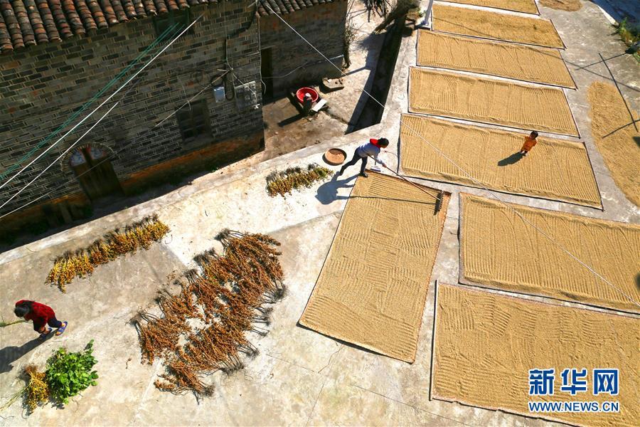 10月30日,江西省乐安县增田镇东湖村村民在晾晒丰收的农作物。  新华社发(曾文才 摄)