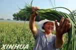 石家庄2019中国农民丰收节庆祝活动9月23日在平山举行