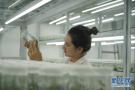 河北青龙:中药材种植助农增收