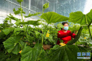 河南新乡:抢抓农时保绿蔬供应