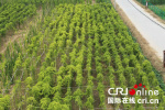 【决胜2020 乡村振兴看河南】焦作:规模产业绘就乡村振兴大蓝图
