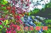 同安枫叶红了引驴友无数 汀溪村民担心原生态环境遭破坏