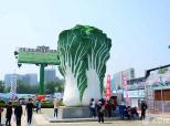 潍坊街头现巨型大白菜雕塑