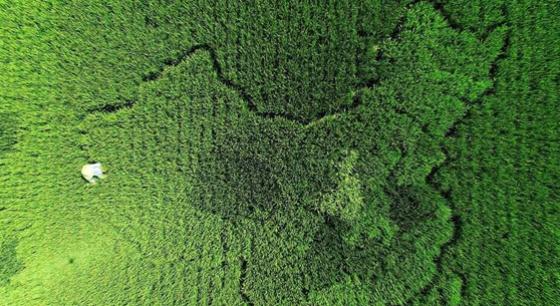 上海老人种植水稻版