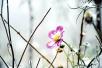 襄阳游客到南阳山区赏红叶 却巧遇一场白雪