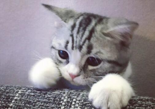 宠物猫叫价13亿