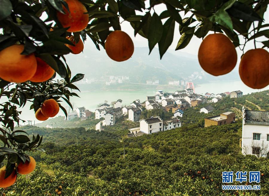小橙子带来的大改变