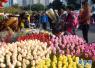 2018广州传统花市平安收市 共迎客508万人次