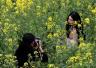 金华:油菜花开 火了乡村游