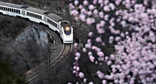 驶向花海的高铁