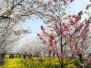 人间最美三月天 趁春光大好河南多地迎短途旅游高峰