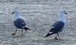 湿地成鸟类天堂