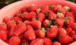 草莓经济富农家