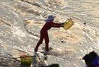 渔民演出日赚千元