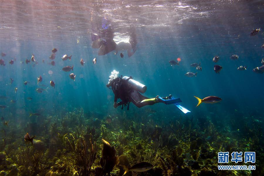 北京赛车官网直播:世界最大珊瑚礁群曾多次毁灭和重生