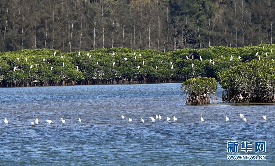 (环境)(6)世界海洋日:保护和可持续利用海洋