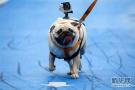 流浪犬管理:养犬人弃养、乱咬人难防、收容站饱和!