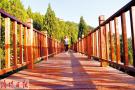 凤凰山森林公园满目葱郁 未来将建玻璃栈道