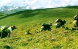 """青藏高原挖来的这种5万一斤的""""仙草"""",不能当保健品直接吃"""