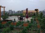 这个中学楼顶有个菜园