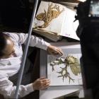 中国数字植物标本