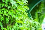 """雨花西路这条""""绿色长廊"""", 成了名符其实的网红"""
