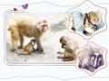南阳人民公园动物园添新星:有果子狸和豹猫