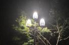 """杭州60条道路将""""增亮"""" 标志性玉兰灯重回少年宫广场"""