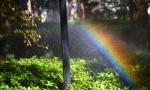 """惊艳了我的大南京!太平北路雾森系统喷出""""彩虹雨"""""""