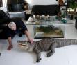 67歲大爺養鱷魚相伴