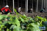 前三季度定州市转移农村劳动力就业10140人